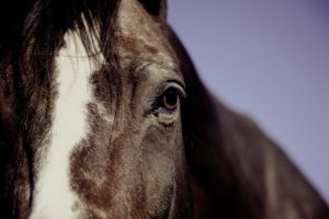 close up of brown horse